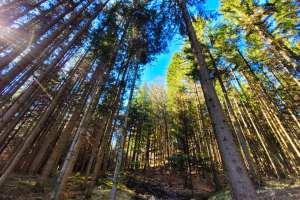 Spaziergang im Schnurbein'schen Wald